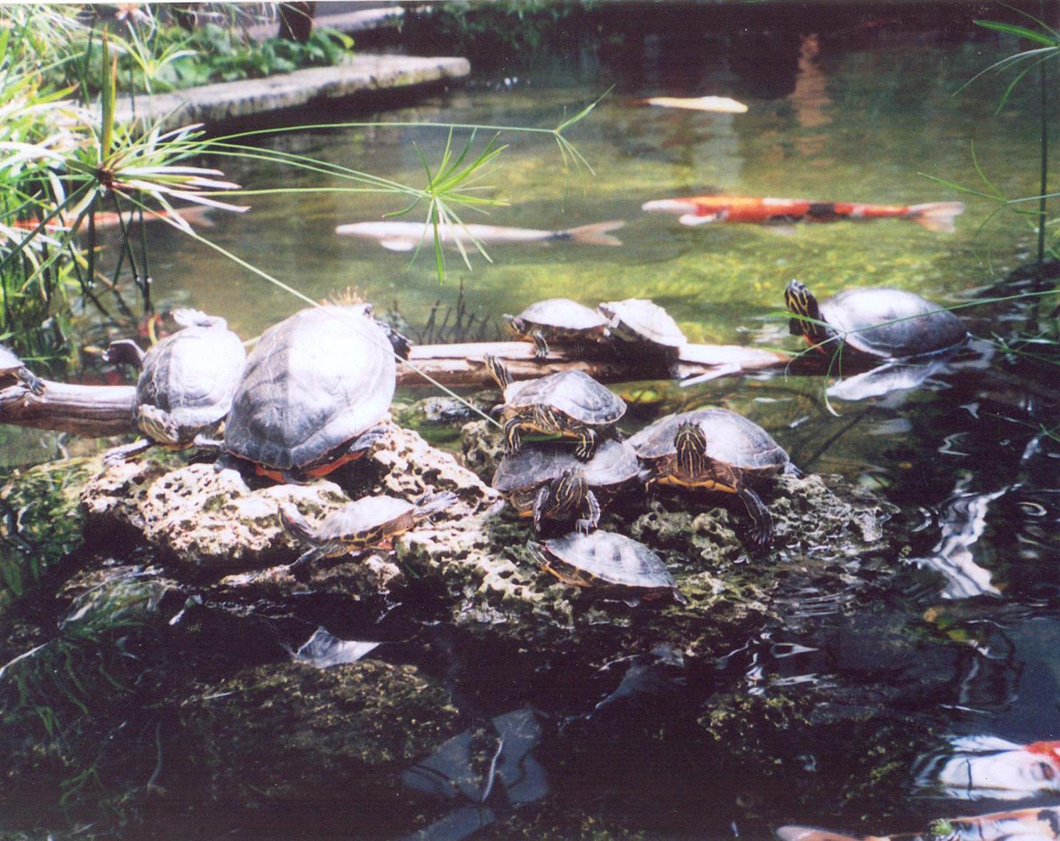 turtle pond   galleryhip     the hippest pics